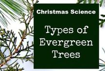 Holiday FieldSTEM / Fun, outdoor-based activities for the holidays.