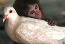 Animals/ Birds