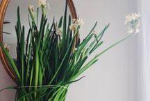 flowers / by Jodi.G