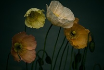 FLORA / Greens, plants & flowers