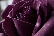 My Color Purple / by Karen Carpentier