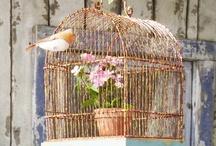 Caged  / by Karen Carpentier