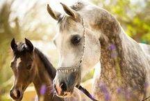 Magnificent Horses!