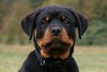 Man's best friend! / Dogs