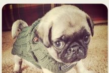 Pugs Not Drugs / I'm Michelle and I'm a Pugaholic.  / by Michelle Lamar