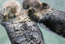 Insanely Adorable Animals