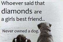 I like Dogs more than I like most people :)