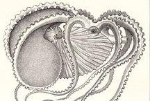 cephalopods * cnidaria / nautilus, octopus, squid, cuttlefish, jellyfish, man-o-war * tentacles / by liz