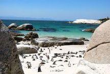 SÜDAFRIKA REISETIPPS & INSPIRATION / Die abwechslungsreiche Natur, die wilden Tiere und die interessanten Menschen, die in Südafrika leben haben uns beeindruckt. Ihr könnt in Südafrika wandern, Elefanten begrüßen oder in Kapstadt den Tafelberg besteigen. Surfer tummeln sich in Jeffreys Bay und andere machen sich auf eine Safari Tour im Krüger Nationalpark. Safari, Animals, Kapstadt, South Africa, Wild Animals, Garden Route, Nationalpark, Johannesburg, Port Elizabeth.