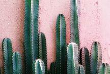 PLANTS&PLANTERS / Kakteen, Monstera Pflanzen oder die Freundschaftspflanze Pilea peperomioides. Grün macht gute Laune und verschönert die Wohnung. In diesem Board findet ihr genug Inspiration zum Thema Pflanzen, Blumen und Kakteen.