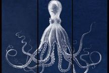 my octopus obsession / by Amy Barker