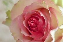 Flowers / by Kristen Smith