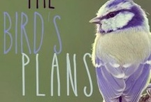 "Winged Bird Stories / A collection of stories from Wattpad's ""Celebration of Birds in Storytelling"" campaign, in conjunction with BirdLife International.  / by Wattpad"