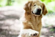 INSPIRE | Dogs We Love / Dog-loving articles filled with kindness and courage
