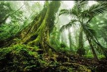 Nature - rainforests and jungles / by Marianne Curley