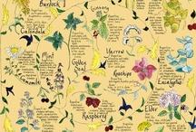 Art*Flora / by Antonietta Tartaruga Lenta