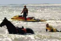 Lifeguards / De professionele KNRM strandwachten welke de stranden op de waddeneilanden bewaken in de zomer. / by KNRM Sea Rescue