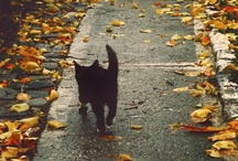 Autumn Fall Halloween!  / by