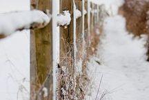 Walkin' in a Winter Wonderland / by savvycityfarmer