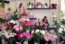 Gabrielle Rose Florist / Whatever the occasion for wanting flowers Hall's Florist have a vast range of floral displays and gifts to choose from which can be delivered around the world. Visit our webpage at... http://www.floristsite.co.uk/