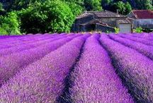 Travel in Color: Purple / From light lavender shades, to deep royal hues, purple is a color of extravagance and beauty. Inspire your travels with the richness of this hue. / by Demeure