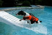 Dog Days of Summer / Pet products perfect for the warm summer months.