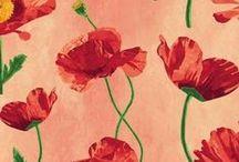Poppy Nursery / by Monika Paden