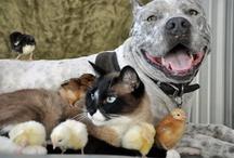 Fur-ever Friends ♥  / Celebrating the inter-species bond!