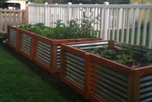 How Does Your Garden Grow? / Growing your own.. Love it!