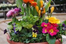 Gardening / by Rosie Gonzales