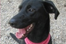 Adoptable Pets in Ohio / Send us info on any Ohio adoptable pet and we will post it here! Thank you for helping animals ♥