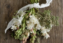 s t y l e   s h o o t / wilderness - cool, muted colors - wild - natural - intimate - tiny touches of gold - winter