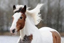 ANIMALS | Horses / The wind of heaven is that which blows between a horse's ears