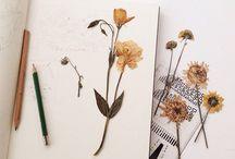 Herbarium / Dry plants, herbarium book