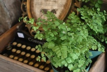 Gardening & Outdoor Decor / by Eileen Terwilliger ~ Starry Girl Farms