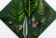 Plants / by Beth Dehghanpoor