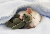 Cute Stuff / by Lori Jensen