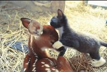 Animals (Odd Couples) / Animals Are Amazing:  / by Lois Christensen