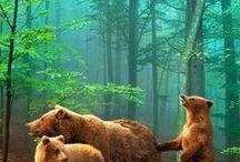 Bears / by Lois Christensen