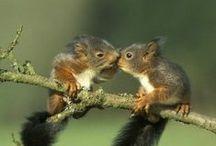 Awsome Animals / I love animals of all types, sizes.  / by Lois Christensen