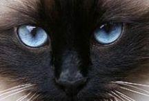 Amazing Eyes / by Lois Christensen