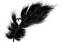 Birdacious