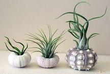 DIY - Gardening / by Keri Dawn