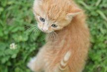 cats / 우리집 고양이들