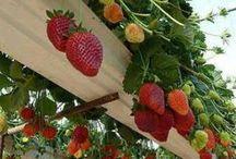 gardening: eat