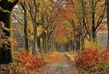 Seasonal Inspiration / by Peggy Lee