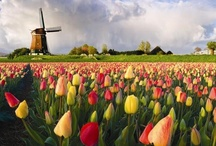The Netherlands... Because I am Dutch / by Patty Courtney