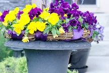 Gardening: Container / A collection of container gardening ideas, information and inspiration.