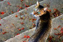 Cats Ⅱ / by yumeneko
