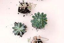 Natural: Grow!